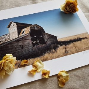 Broken Barn Print pictured with dried roses.