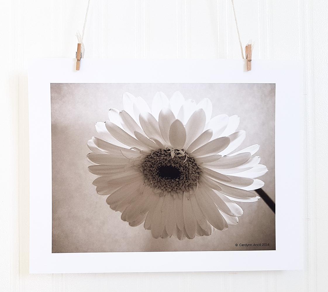 Floral Art Print Gerber Daisy III Product