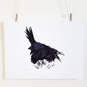 Ruffled Raven ink drawing is suspended by 2 miniature clothespins against a white background. Raven is in an agitated stance with mouth open to caw. The wings are held away from its sides and the tail is up. The bird is black with dark blue highlights set against a white background.