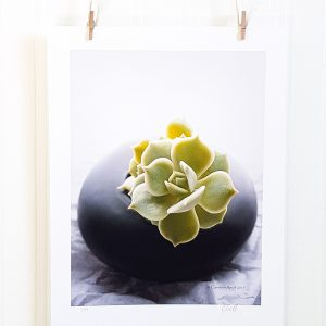 Succulent Spa photograph hangs suspended by 2 miniature clothespins against a white background. Succulent plant in a black matte ceramic container against a crumpled white paper background.