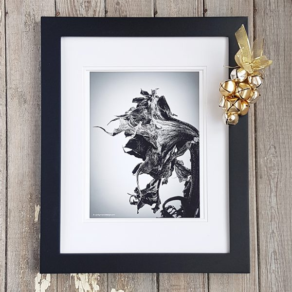 Photo of Winter Sunflower photograph in black frame against weathered wood background. A single gold pine cone with a gold bow, sits on the upper right corner of the frame.